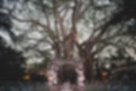 0425-20170218_2401_BC1_2703.jpg