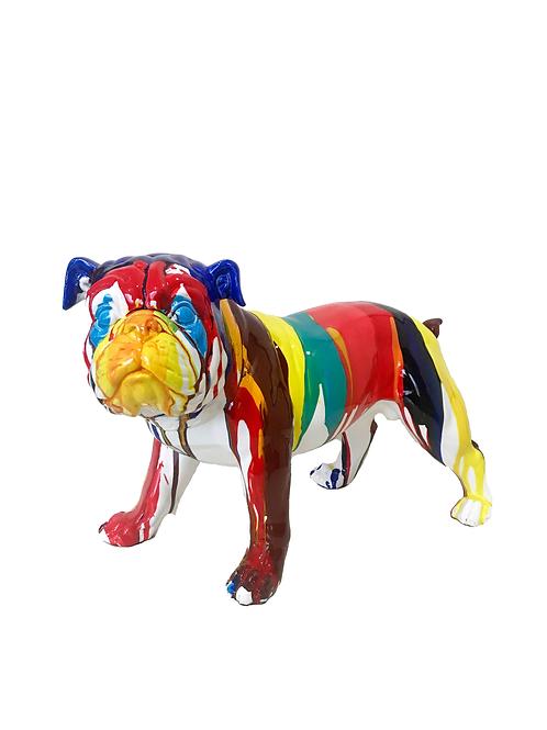 Bulldog multicolor