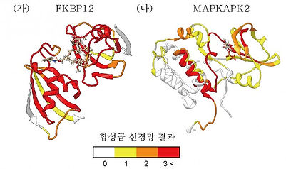 단백질.jpg