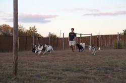 dogs running (1)