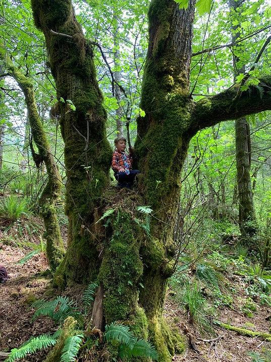 koda in a tree.jpg