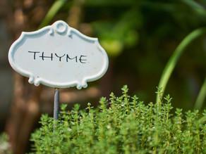 Le thym, une plante aromatique aux mille vertus