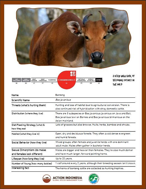 Banteng Fact Sheet