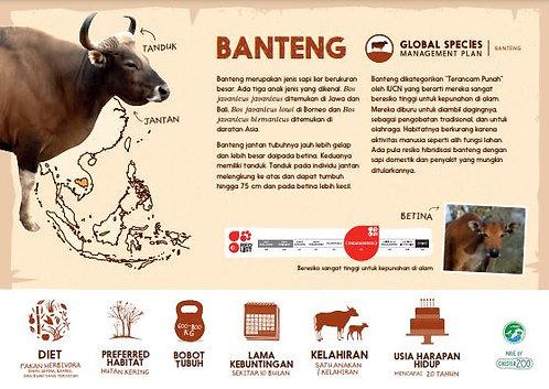 Banteng Species ID