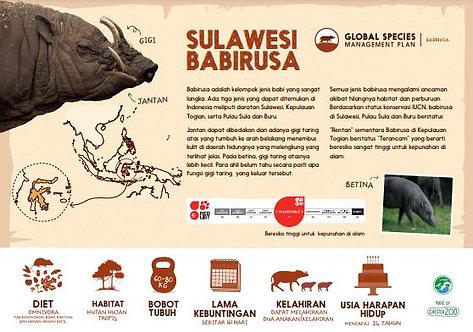 Babirusa Species ID
