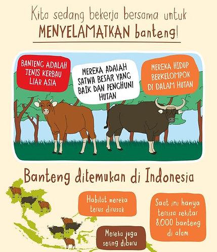 Banteng Infographic