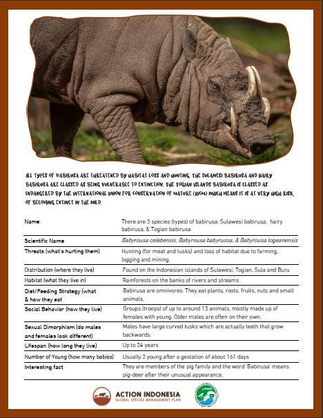 Babirusa Fact Sheet