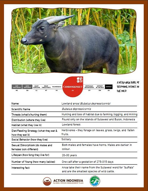 Anoa Facts Sheet