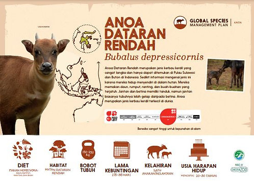 Anoa Species Sign