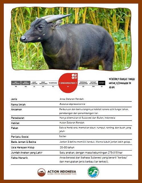 Anoa Fact Sheet