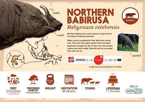 Babirusa species sign