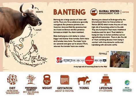 Banteng Species sign