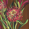 painting protea