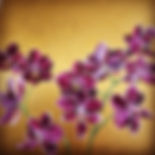 Orchids on Gold painting