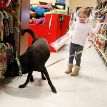 bills rise as pets go corporate.JPG