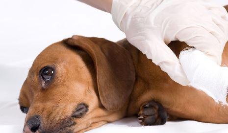 pet industry is a 19 billion market.JPG