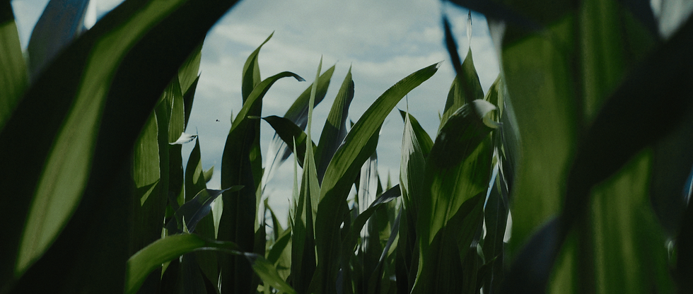 Film Corn.png