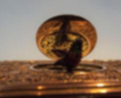 bird lid open after.JPG