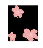 花びら.png