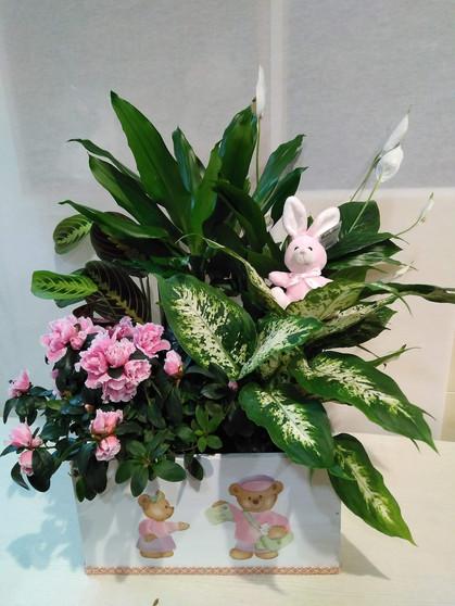 Caja de planta