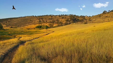 Fort Colllins Pineridge Natural Area