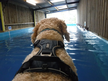Water Training Update for 2021