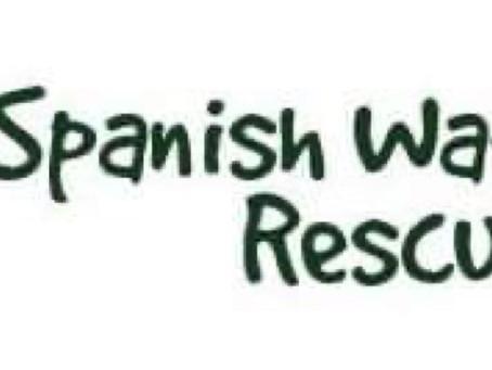 Spanish Water Dog Rescue