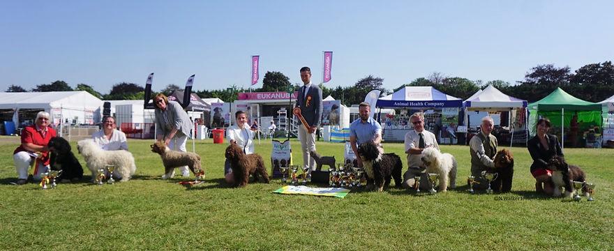 2019 Spanish Water Dog Championship Show Winners