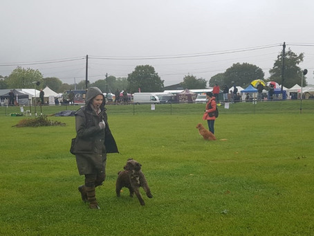 It's not as easy as it looks!   Showcasing SWD's at the Ardingly Game Fair.