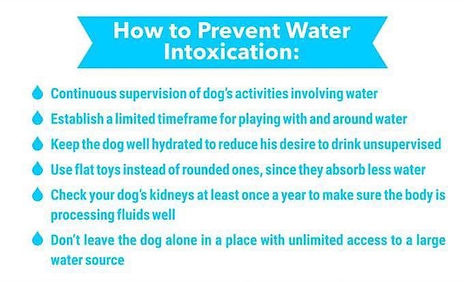 How to Prevent Water Intoxication in Dogs