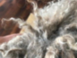 Spanish Water Dog Coat / Cords
