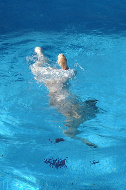 A Spanish Water Dog Diving underwater for a retrieve