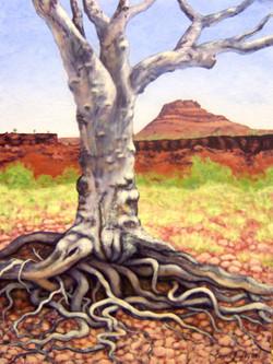 Old Tree near Munjina