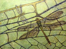 Wings of Change - Dragonflies