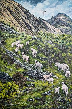 Sheep Climb near Lake Hawea, NZ