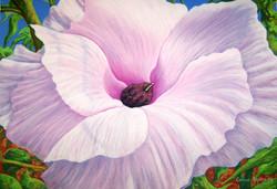 Wild Hibiscus 2