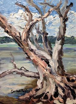 Study of an Estuary Tree Skeleton