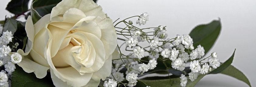 roses_rose_flower_flowers_white_gypsophi