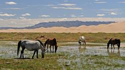mongolia-3046030__480