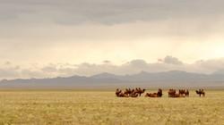 mongolia-695267__480
