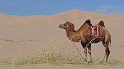 mongolia-3046029__480