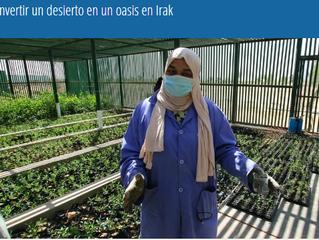 Convertir un desierto en un oasis en Irak