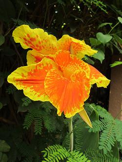 Une fleur exotique
