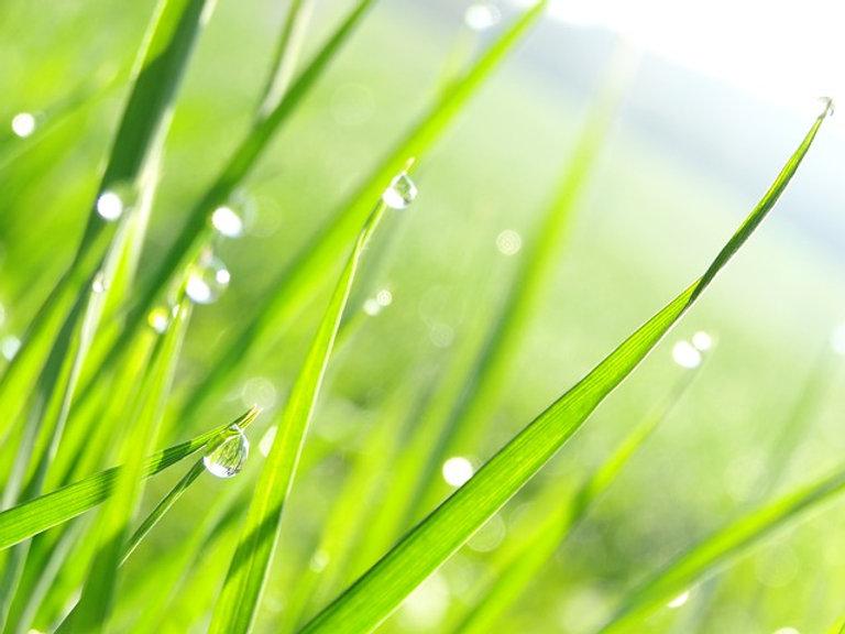 Wet Grass.jpg