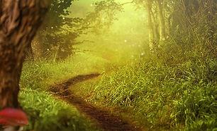 Magical forest.jpeg