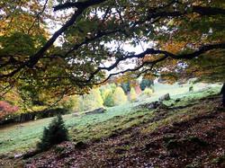 mountain landscape 3.jpg