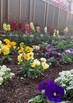 中庭にてすくすく育つ花