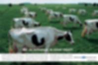 koeien_s.jpg