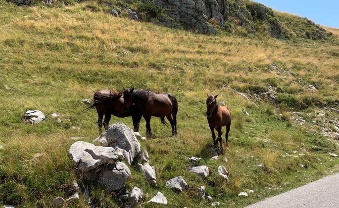 Durmitor-National-Park-Durmitor-Ring-Sed