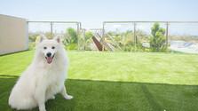 happy dog artificial grass.jpg
